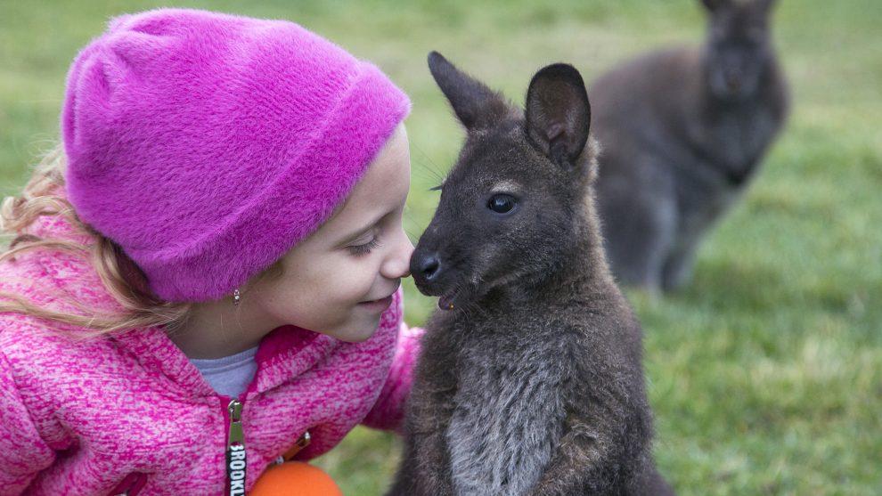 kenguru különleges állatok riport