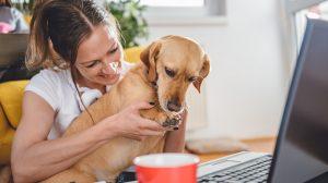 állatbarát csapatépítés kutya kutyát az irodába rólunk szól