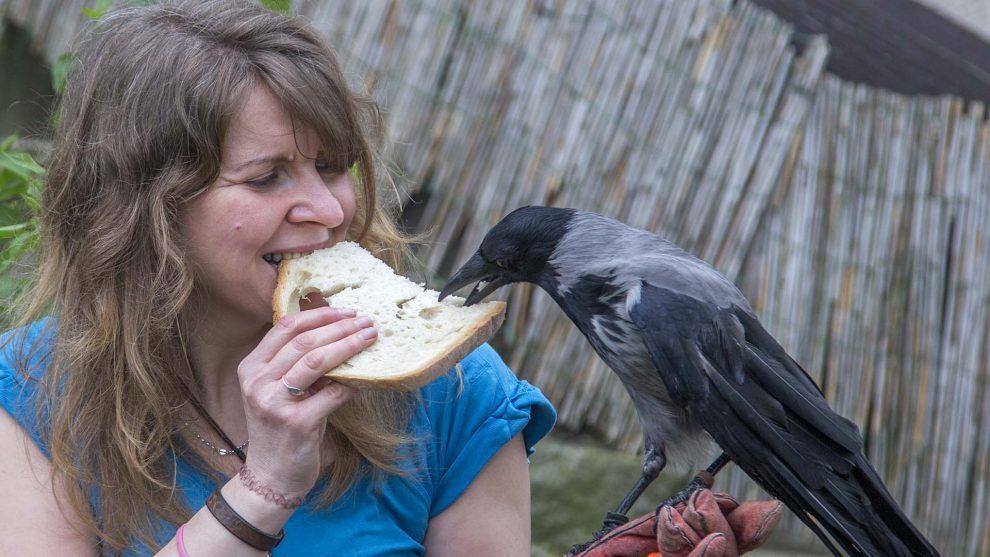 dolmányos varjú hortobágyi madármentő állomás laczkó orsolya okostelefont kezelő varjú papp noémi sherlock a varjú varjú a családtag