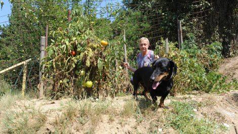 életmentő műtét jani bácsi kaizer házaspár kati néni kórház kutya kutyaharapás kutyatámadás pitbull pitbull terrier sérülés virág márton