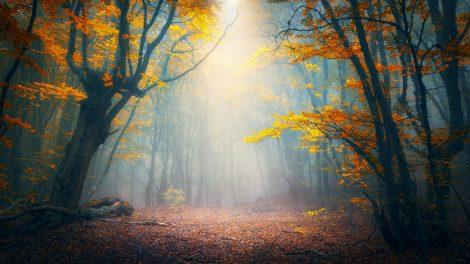 apró jelek energia ezotéria lélekgyógyász melitta spirituális ébredés spiritualitás testi és lelki változások trauma új élmények változás ványik dóra