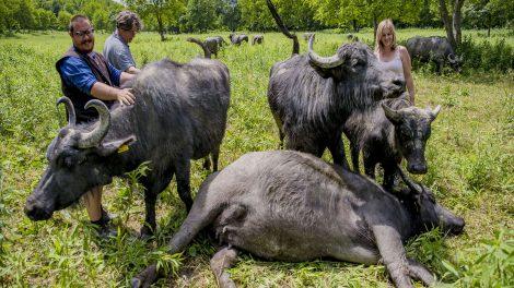 bakács tibor bivaly bivalygazdák szubkultúrája hajnal györgy jószág kecske ló őshonos fajok osvald zsófia szamár