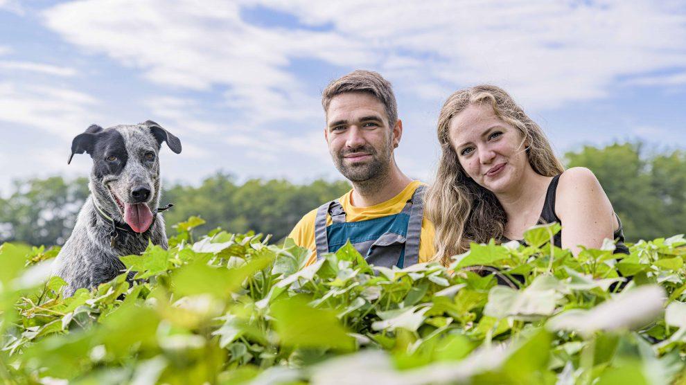 batáta batáta-pástétom-család batátapalánta-értékesítők befőzés édesburgonya földbérlés gazdálkodás gyomlálás kapálás lajosmizse lakókocsi márkus dávid söptei zsuzsanna tukacs julcsi