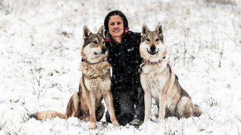 b. molnár márk bevésődés csehszlovák farkasok dr. csomó zsuzsa dr. ozval istván életforma farkas farkaskölyök farkasüvöltés hiperaktív makacs molnár edit öntörvényű szocializáció