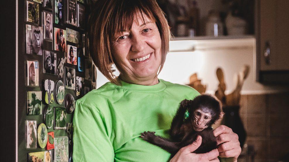 dzselada pávián kismókus majmok marokházi katalin tévé tigris vadállatok ványik dóra veszprémi állatkert zsiráf