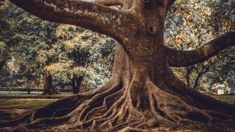 almafa cseresznyefa diófa életfa ezotéria fűszernövények fűzfa hársfa hóvirág istenfa körtefa lélek magyar kertek negatív energiák növények rózsa sárga nárcisz szakrális szakrális kert tisztaszoba ványik dóra vízér