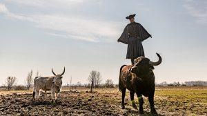 bivaly kecske kobold a bivaly lenner ádám monster őshonos állatfajok szamár szociális szürke marha tanya tanyasi élet természeti értékek debreczeni csilla