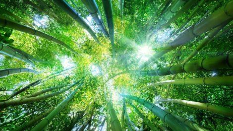 bata kata életfelfogás japán módszer kaizen következetesség megoldás problémák változtatás