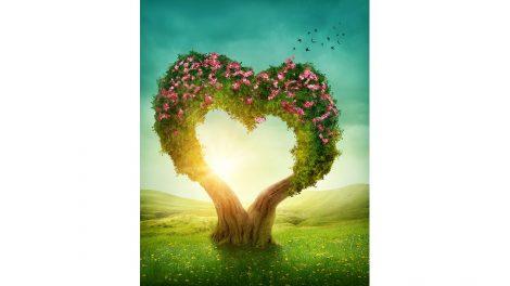 kagyló kalász léleksegítő mágia melitta rózsa szerelem szerelemvonzó varázslatok ványik dóra