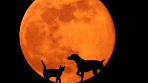 bak bika ezotéria halak horoszkóp ikrek kos kutya-macska horoszkóp mérleg nyilas oroszlán rák skorpió szűz ványik dóra vízöntő