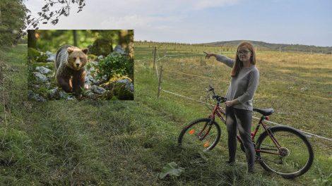 anyamedve biciklizés debreczeni csilla gombkötő péter medve medveészlelés saliga zsófia szente zoológiai szakreferens