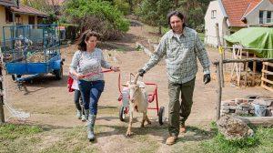 beréti zita fertőzés gaga kecske kerekeskocsi mérgezés önkéntes ványik dóra