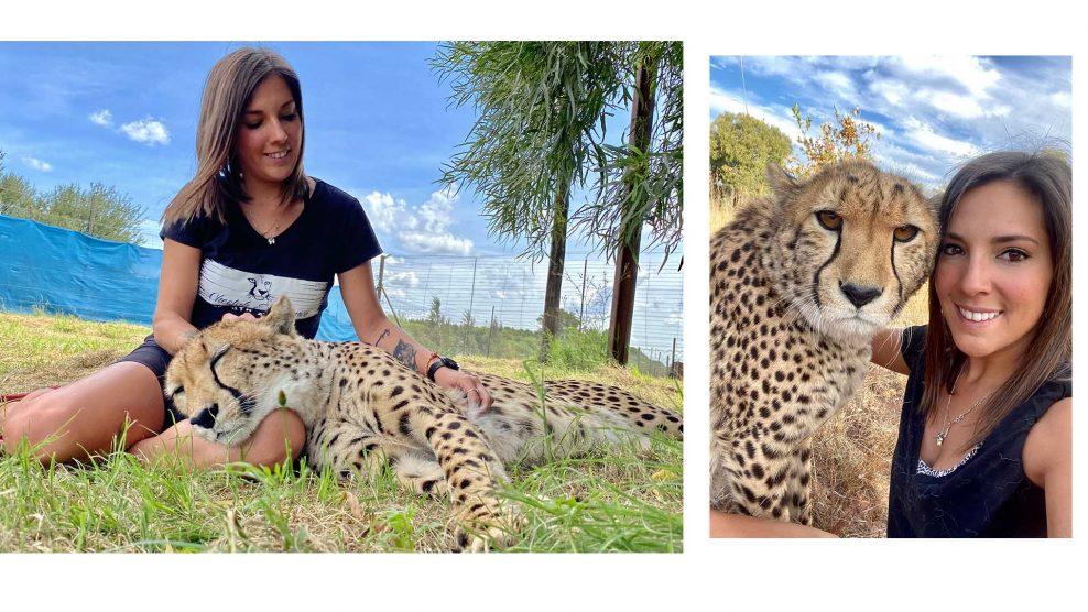 belicza bea cheetah experience dél-afrika gepárdok nagymacskafarm önkéntes tóth brigitta vadállatok
