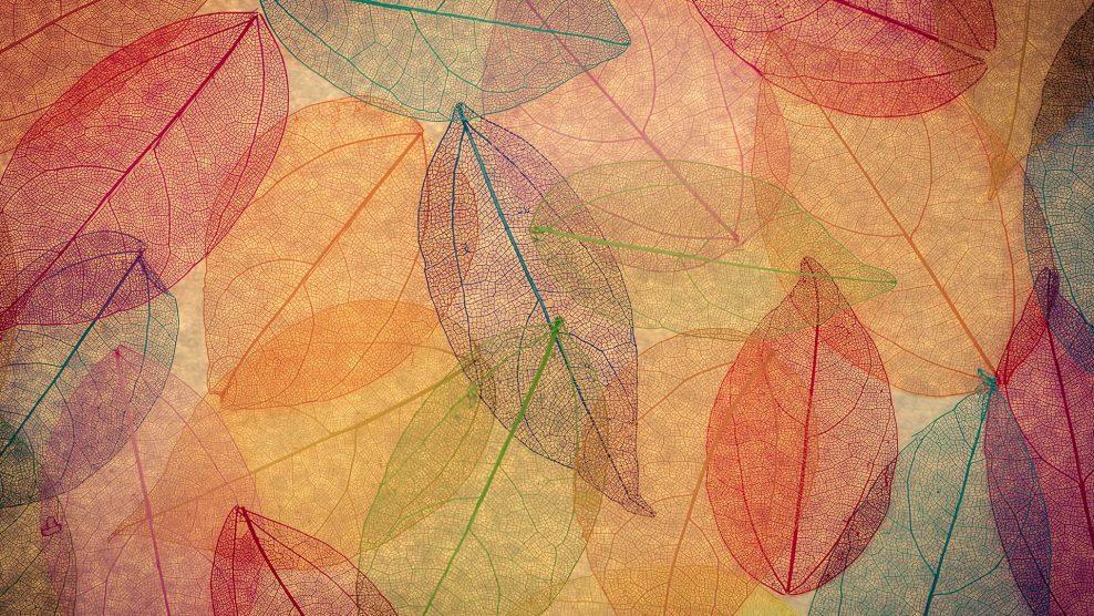assisi szent ferenc ezotéria halloween halottak napja mágikus dátumok márton napja napéjegyenlőség napfelkelte napnyugta népi babonák ősz ványik dóra varázslatos dátumok
